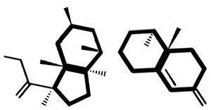 broken cortisol molecule